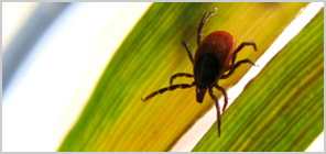 Lyme Disease Treatment